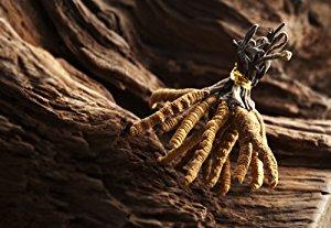 Đông trùng hạ thảo Cordyceps