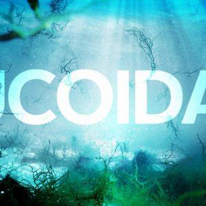 Những điều cần biết về Fucoidan đỏ 150 viên Nhật Bản